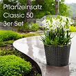Pflanzeinsatz, 3er-Set, groß classic50