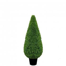 Buchsbaum Kegel H 80