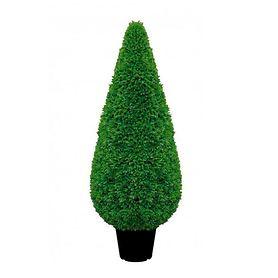 Buchsbaum Kegel H 120