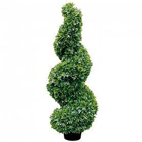 Buchsbaum Twist H 150