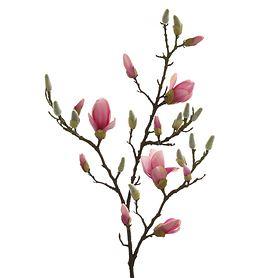 kunst-magnolienzweig