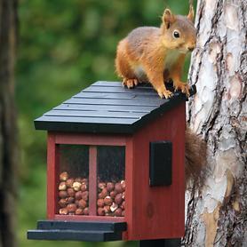 Eichhörnchen Futterbox