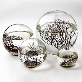 Ökosystem im Glas EcoSphere