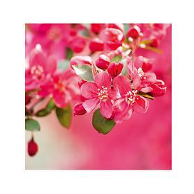 Glasbild Crabappel Blossoms H 30 x B 30 x T 0,5 cm