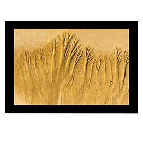 Bild Sandbäume 6