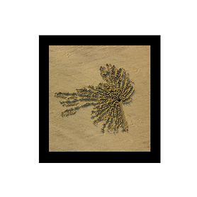 Bild Sandspirale Vogel 4