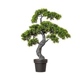 bonsai-teeblatt-h-90cm