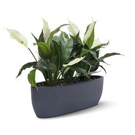 kunstpflanzen-tisch-set-easy-matt-schwarz