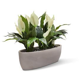 kunstpflanzen-tisch-set-easy-marmor-grau