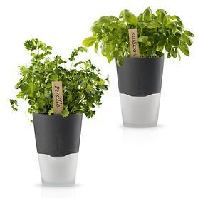 Kräutertopf Plant