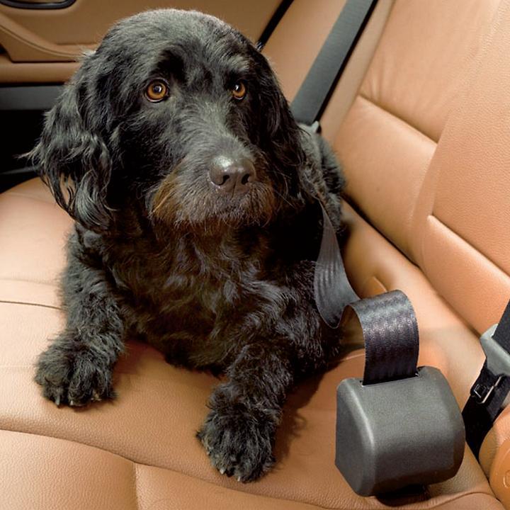 Hundeanschnallgurt Click n Roll