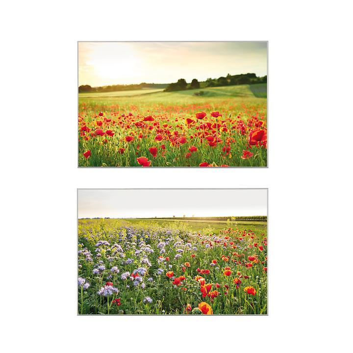 Digitaldruck Mohnblumen & Blumenwiese