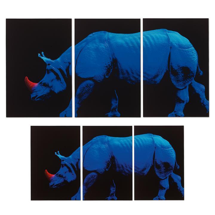 Bild Blaues Nashorn, 3-tlg.